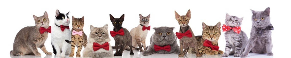 large group of cute cats wearing colorful bowties