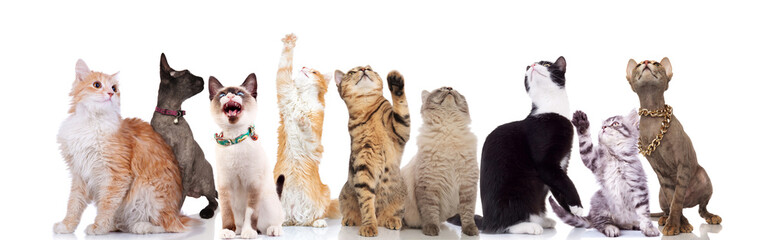 lovely large group of cats looking up to side