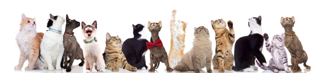 large team of curious cats looking up with paws raised