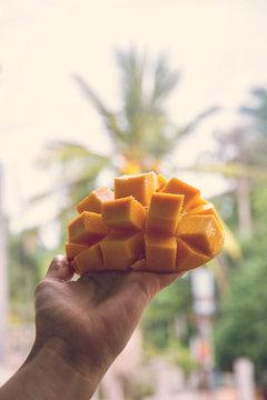 ripe mango in hand