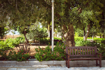 bench in the park, lovley place for couples