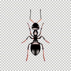 Realistic Ant top view isolated on 