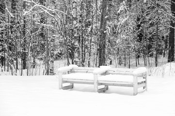 Bench in a forest covered with snow
