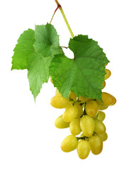 bunch of fresh grapes and leaves . Isolated on white background without shadow. Close-up.