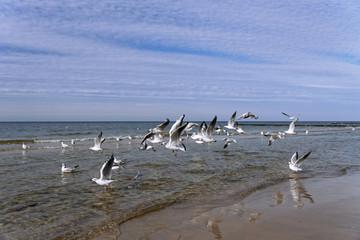 Gulls flying on the seashore.
