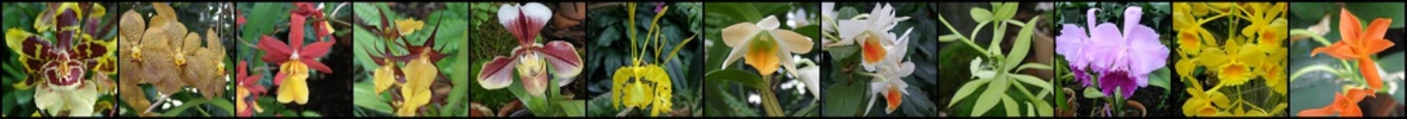 Fototapeta Orchidea i storczyk