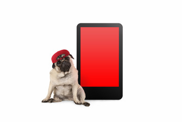 cute pug puppy dog looking smart, sitting next to tablet phone with blank red screen, wearing cap, isolated on white