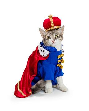 Cat In King Halloween Costume