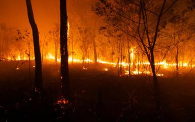 Foto auf Acrylglas Schokobraun Bush Fire