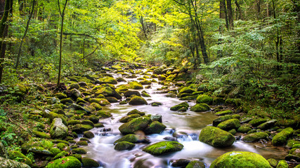 Creek Running Through Roaring Fork in Smoky Mountains