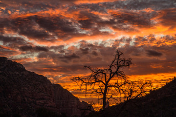 An tree in silhouette at sunrise against bright red and orange sky