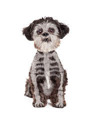 Funny Halloween Dog With Skeleton Painted Fur
