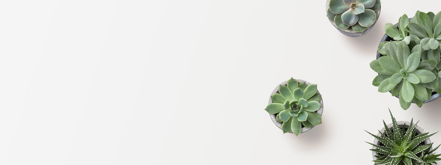 Photo sur Aluminium Cactus minimalist modern banner or header with succulent plants on a white surface with lots of copyspace for your text - top view / flat lay