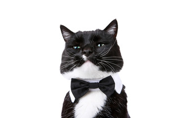 Black and white tuxedo cat in a bowtie isolated on white