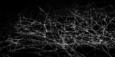 Spider web or cobweb on black background