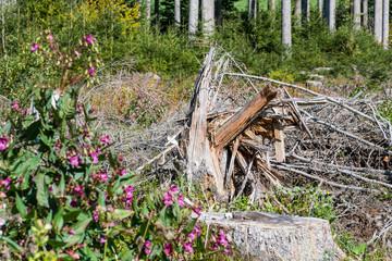 Gesplitterter Baumstamm nach Sturm