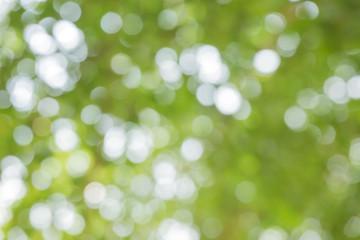 green bokeh / bokeh from tree / Blurred nature background / green and white background from tree in sun light. Wall mural