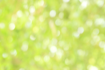 Blurred park with bokeh background / Blurred nature background / green and white background from tree in sun light.