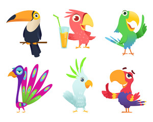 Tropical parrots characters. Feathered exotic macaw birds pets colored wings funny exotic flying arara action poses vector pictures. Animal bird character various colored illustration