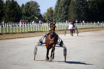 Horses trotter breed in motion harness racing at Hippodrome