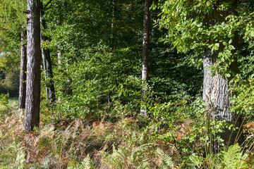 Herbstlicher Wald bei Allensbach