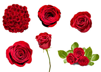 flower rose petal blosspm background