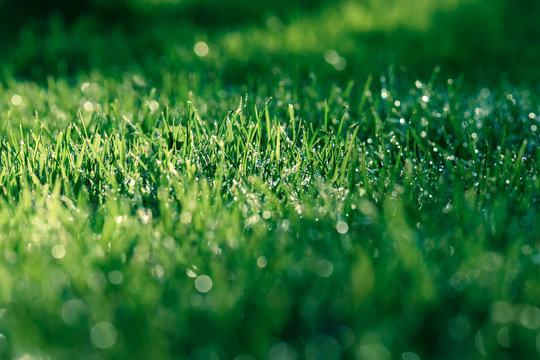 Herrlich frische Wiese mit Tautropfen nach dem Regen oder Tau am Morgen grün und saftig