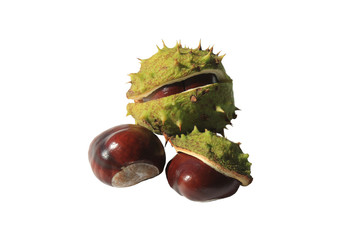 Ripe brown chestnuts isolated on white background