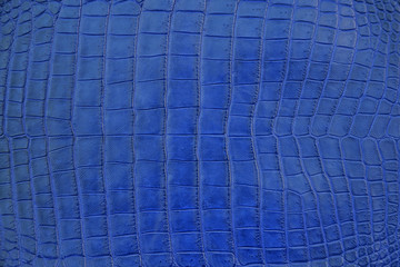 Close up of Navy Blue Crocodile,Alligator belly skin texture use for wallpaper background.Luxury Design pattern for Business and Fashion.Top view surface in backdrop.