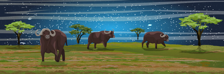 Starlight Night. A herd of African black buffalo in the savannah. Grass and acacia trees. Realistic vector landscape. Nature and animals of Africa. Reserves and national parks.