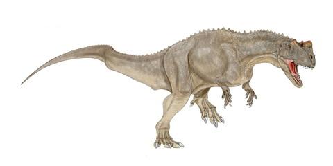恐竜 ケラトサウルス。ジュラ紀後期のアメリカ大陸やタンザニアで化石が発見されている。前脚の指は4本で同時期のアロサウルスよりも小型で、原始的な特徴がある。特徴は両目の上と鼻の上の3か所に小さな鶏冠状の突起があった。頭骨は軽く、華奢である。獣脚類としては中型であったが、歯の構造は短剣状に薄くて鋭く、自分より大型の獲物に多量の出血をさせ、倒したと思われる。イラスト画像