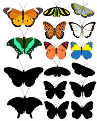isolated set butterfly, large collection
