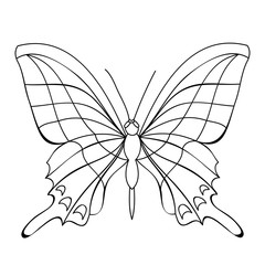 vector, isolated, book coloring, butterflies