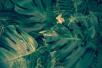 Various dark green tropical leaves and plants top view