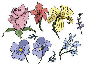 Awesome set of hand drawn flowers colored in bright tones
