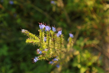 Wildflowers, grass close-up, general, during sunset or dawn in the foreground, blurry from behind, free space