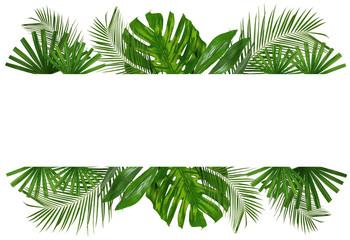 Beautiful tropical Aspidistra leaf on white background Wall mural