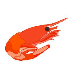 prawn boiled, food
