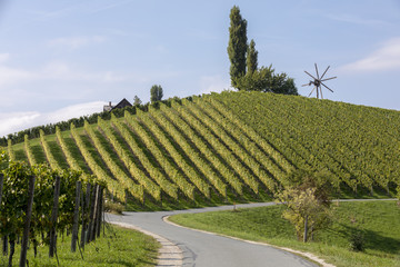 scenery vineyard along the south Styrian vine route named suedsteirische weinstrasse in Austria in autumn, Europe