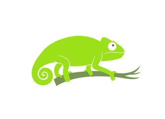 Green chameleon. Abstract chameleon on white background