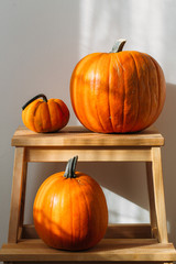 Autumn decoration on white with copy space. Pumpkins