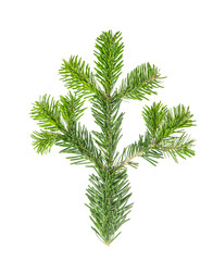 Spruce twigs Branch Christmas tree isolated white background