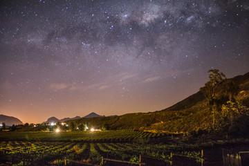 Wine Farm Vineyard