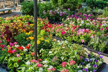 flowers in public market