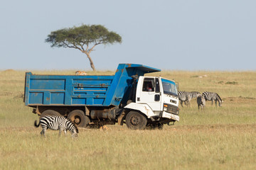 Truck driving on the savannah among wild animals