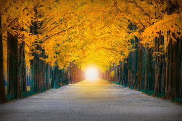 The light at the end of beautiful tree tunnel in Korea at Damyang metasequoia road