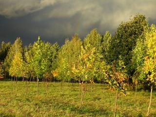 Autumn landscape with storm clouds