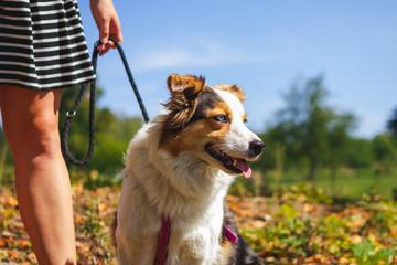Girl on walk with her dog, Australian shepherd