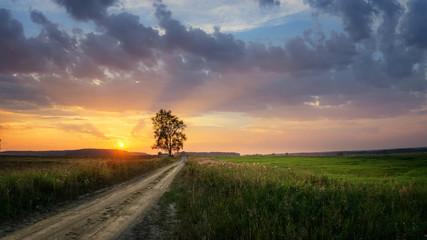 панорама заката в поле с дорогой и деревом, Россия, Урал