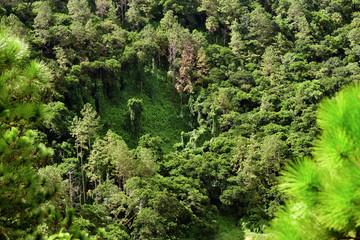 Mauritius island jungle